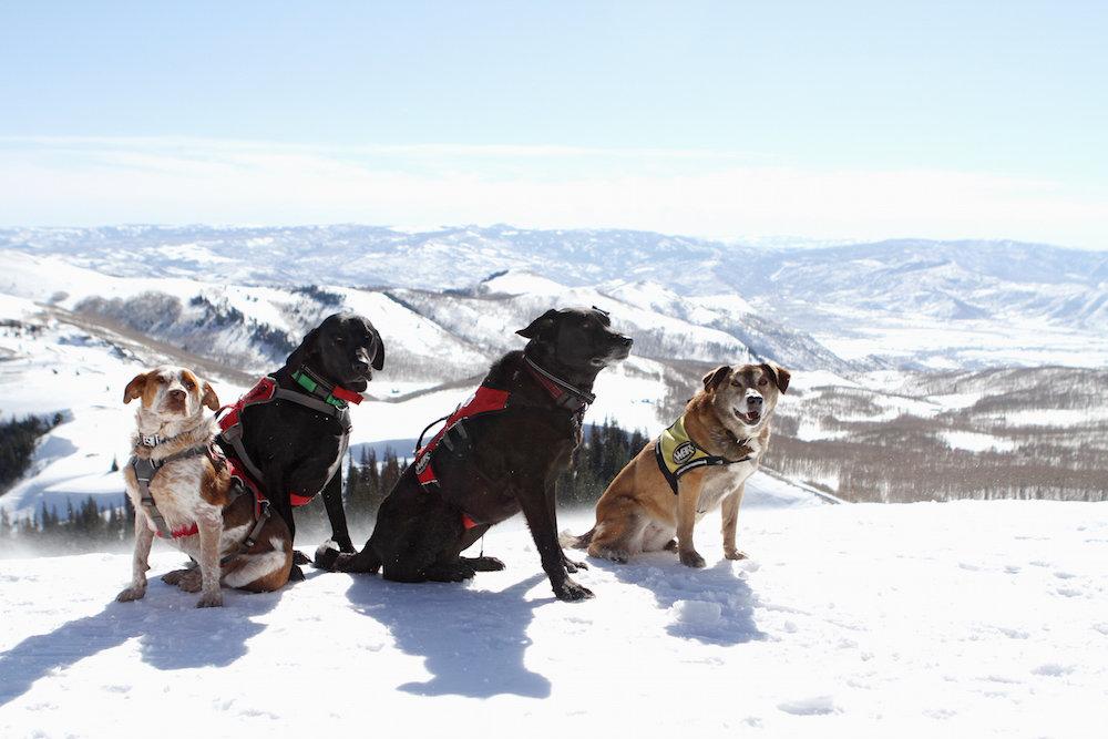 Pup Patrol: poten schieten ter hulp. - © Deer Valley Resort