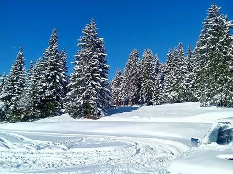 Fresh snow in Winter Park Martinky - © R. Vanko
