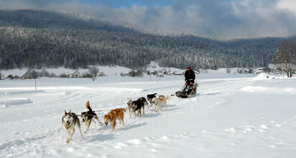Ambiance grand-nord lors des baptèmes et initiations à la conduite d'attelages de chiens de traineaux à Méaudre - © Entre chiens et loups