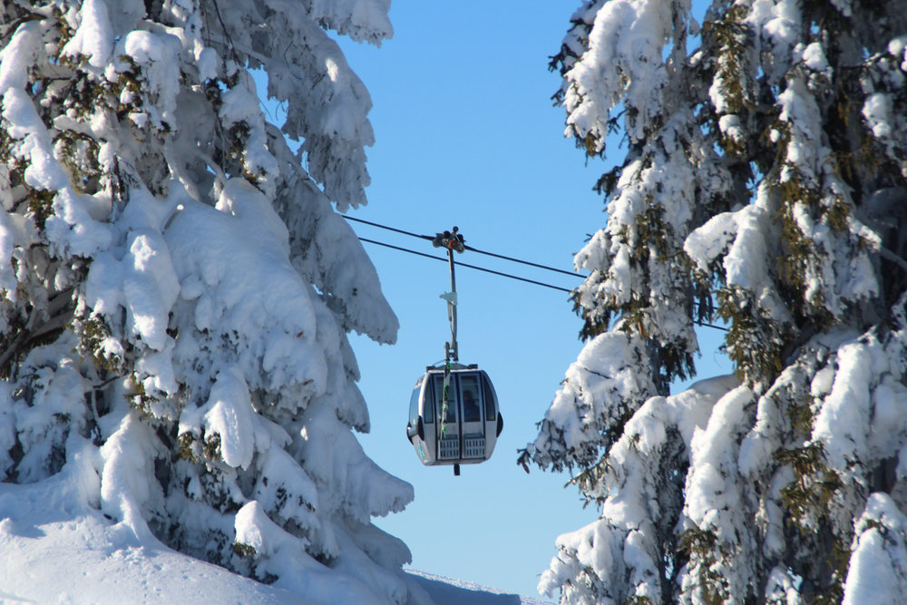 Verschneite Bäume in Kössen - © Bergbahnen Kössen
