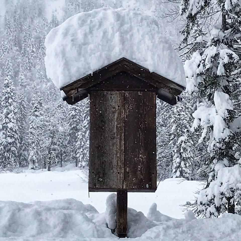 - © Facebook Kitzbüheler Alpen St. Johann in Tirol