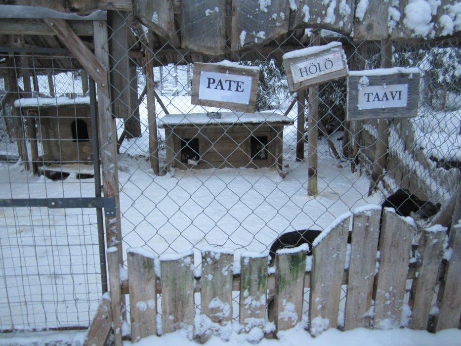 Husky kennels in Lapland - ©Patrick Thorne