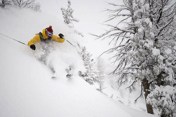 A skier avoids the trees in the backcountry of Jackson Hole, Wyoming  - © Jackson Hole