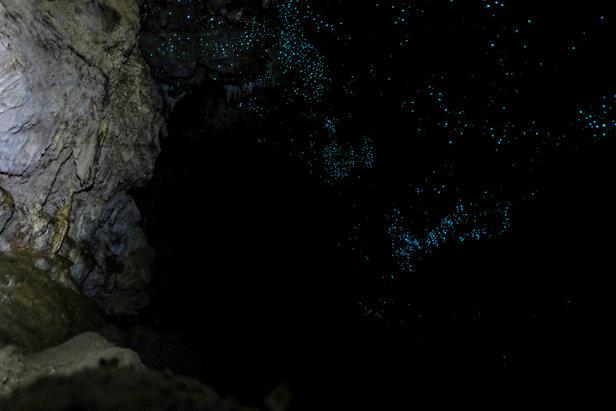 Glühwürmchen im Waipu Cave  - © Julia Mohr