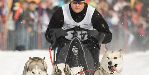 SnowWorld_hunde