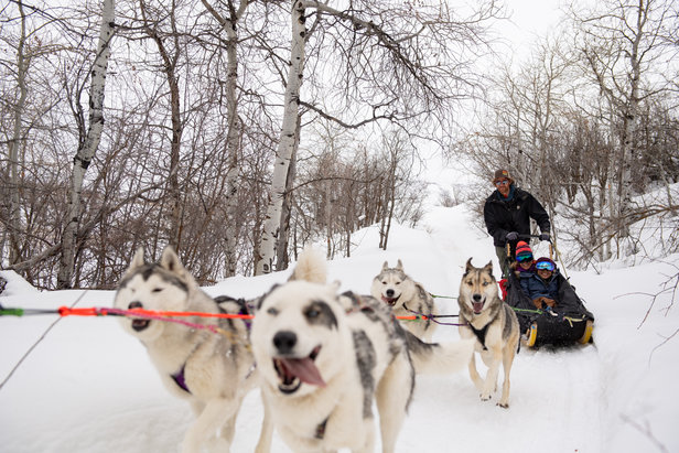 If skiing or boarding isn't your thing, take advantage of the off-mountain activities, like dog sledding with All Seasons Resorts at Deer Valley.  - © Mike Schirf