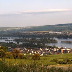 Blick auf Rüdesheim am Rhein - © Rheinsteig-Büro