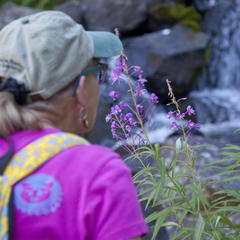 wildflowers - © Mammoth Lakes Tourism