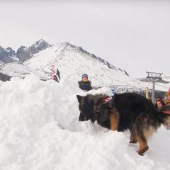 Snežné psy v Tatranskej Lomnici - © archív TMR
